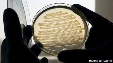 E coli's maken diesel (foto BBC)