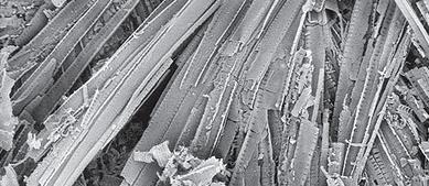 Microscoopopname van kiezelgoer