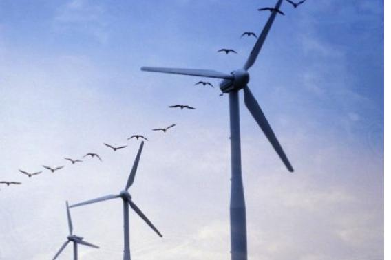Windmolens (foto De Standaard)