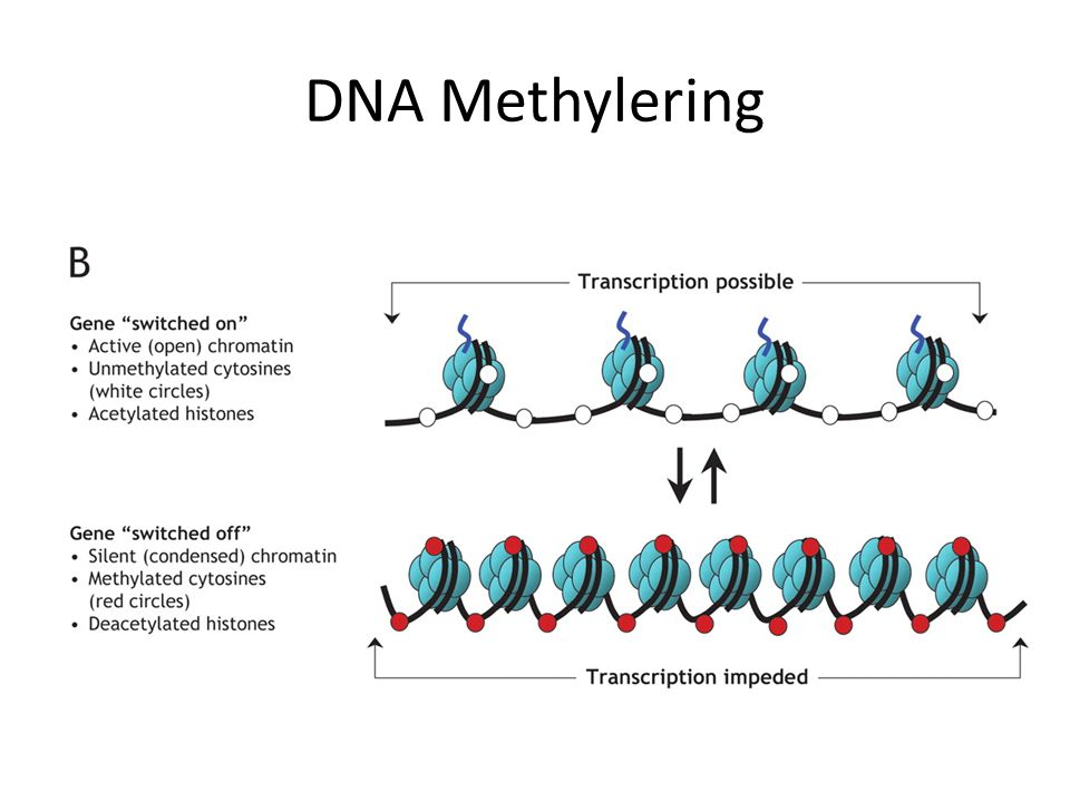 DNA-methylering